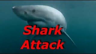 Shark Attacks Compilation