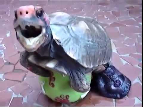 turtle dick