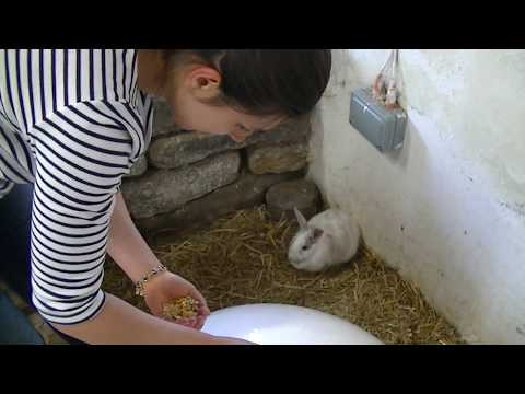 Hand Feeding Rabbits at Newham Grange Country Farm.