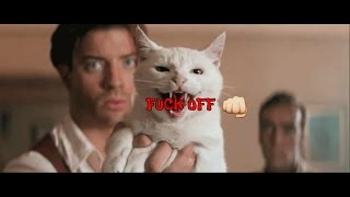 Cats being Jerks #2 - Funny Animal Compilation
