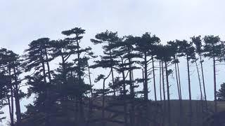Фанни на скале над ущельем Трех гор_Английский кокер спаниель в семье Билых