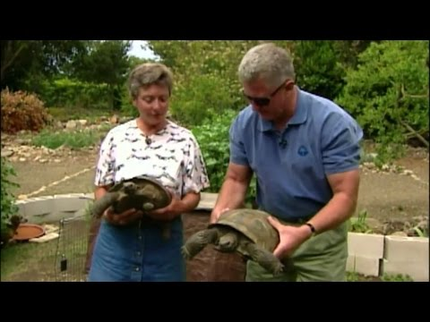 Visiting with Huell Howser: Turtles Lady