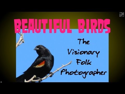 Beautiful Birds HI-RES HD 3D slideshow