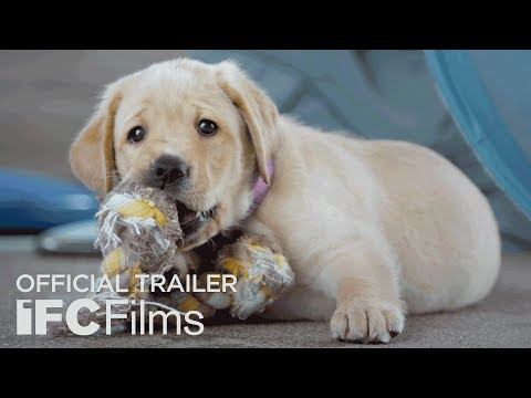 Pick of the Litter - Official Trailer I HD | Sundance Selects