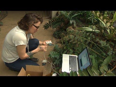 Winnipeg artist using plants to create music