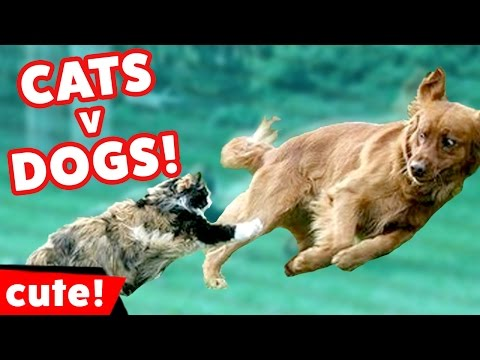 Funniest Cat vs Dog Videos Weekly Compilation December 2016 | Kyoot Animals