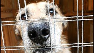 Всяк собакен ищет дом