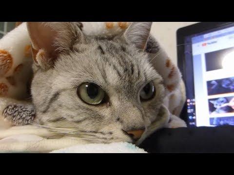 そっとのせ返してくれる猫 ~ものすごく愛を感じた動画❤ -Cat Touches My Hand So Gently