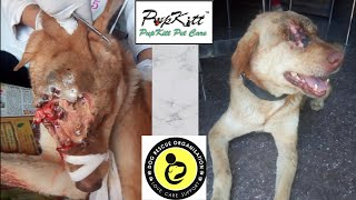 "Due to his strong survival instinct he was named ""Gabbar"" 