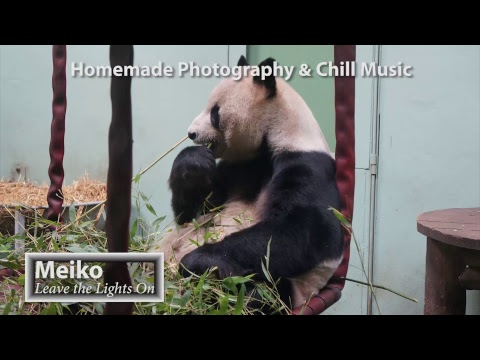 Deep & Tropical House Chill Music Live 24/7 Nature Photographs