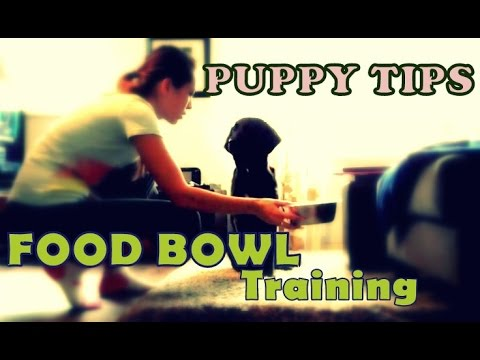 PUPPY TIPS - Food Bowl Training (Creating Calmness At Dinner Time)
