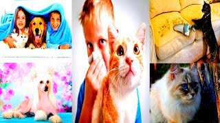 видео Гипоаллергенные коты, не вызывающие аллергию