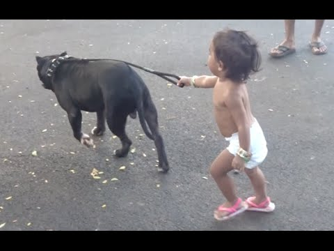 Toddler Walks Pitbull – December 6, 2015 – Ex2L