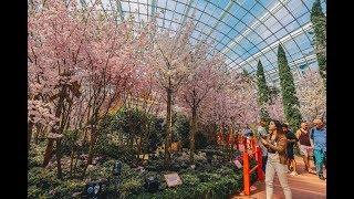 Sakura Matsuri 2019 Floral Display