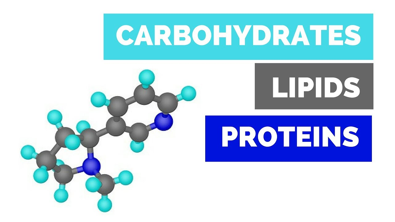 Carbohydrates Lipids And Proteins Basics For High School