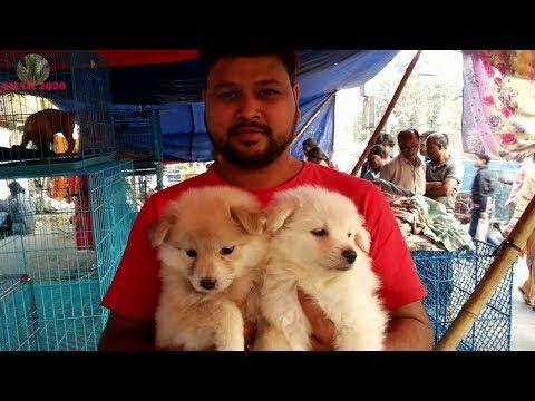 GALIFF STREET CHEAPEST PET DOG MARKET KOLKATA INDIA JANUARY 2018 VISIT | CUTE DOG PUPPY