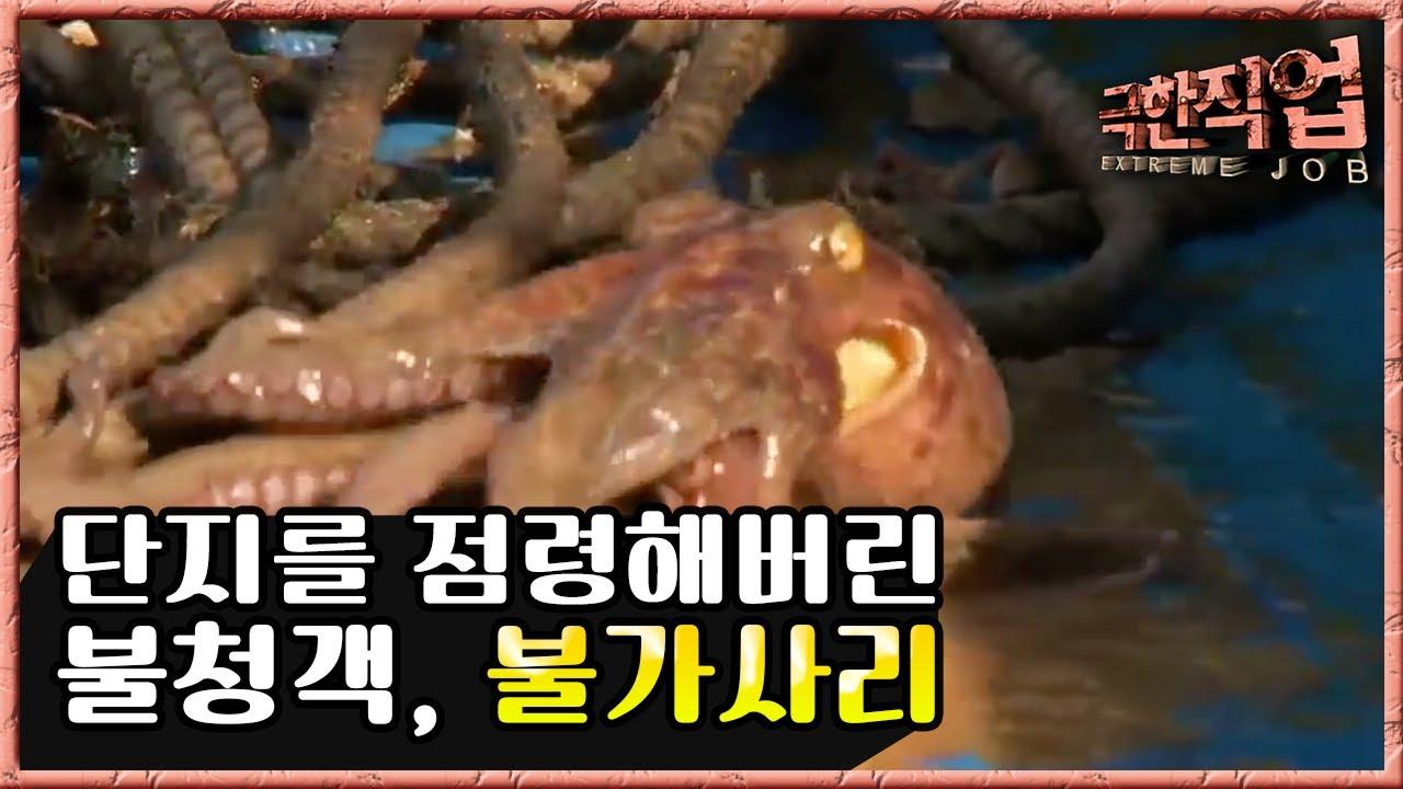 극한직업 - Extreme JOB_전통 문어 잡이_#003