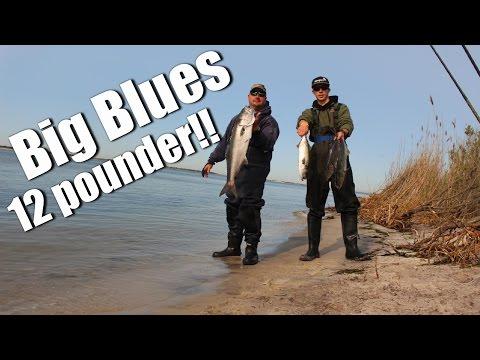 Big Blue Fish On Long Island's South Shore - Saltwater Fishing Long Island