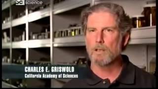 Наука и техника Что строят животные H