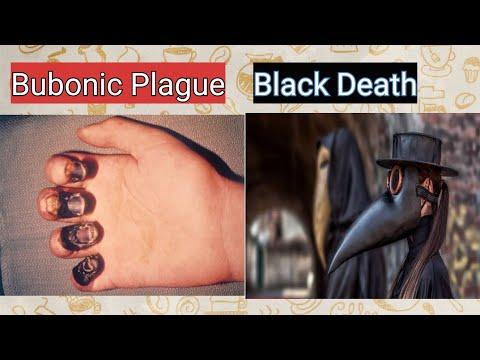 Bubonic Plague    Black Death - YouTube