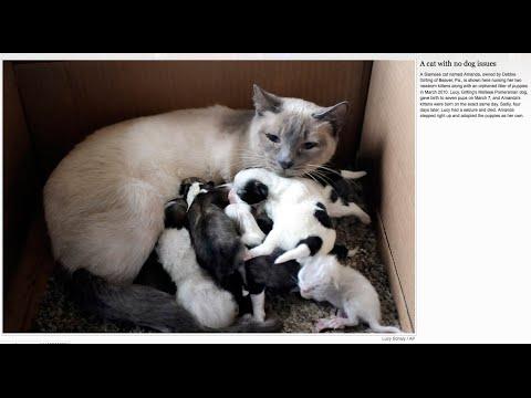 Кошки, своих детей не бросают в беде.