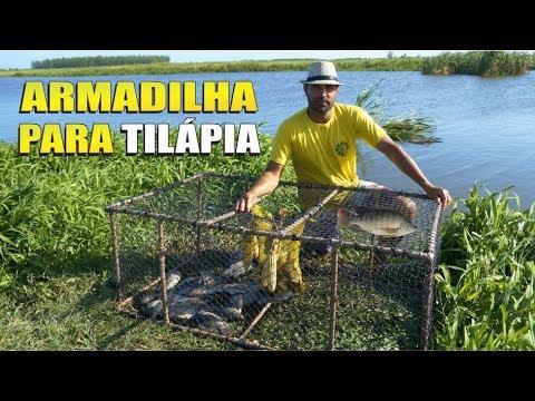 A MELHOR ARMADILHA PARA PESCAR TILÁPIA   DICA Como Fazer Armadilha Para Peixes Com Cano De PVC