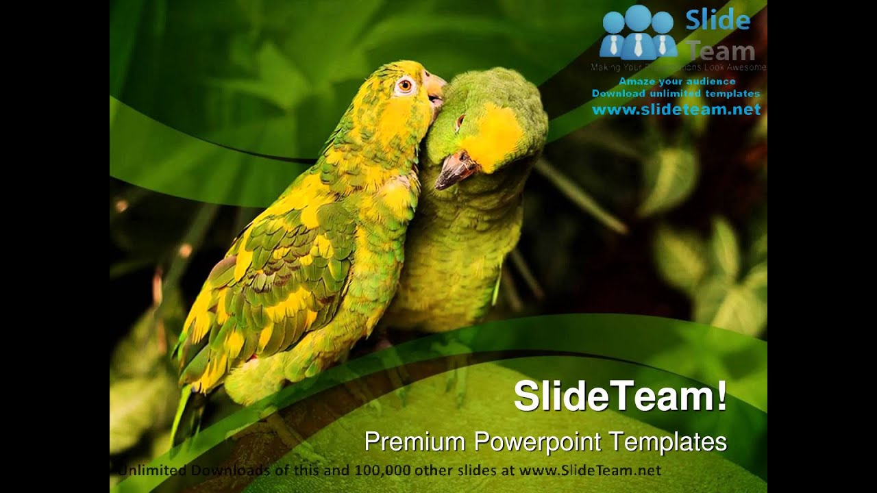 Love birds animals nature powerpoint templates themes and love birds animals nature powerpoint templates themes and backgrounds ppt layouts youtube toneelgroepblik Image collections