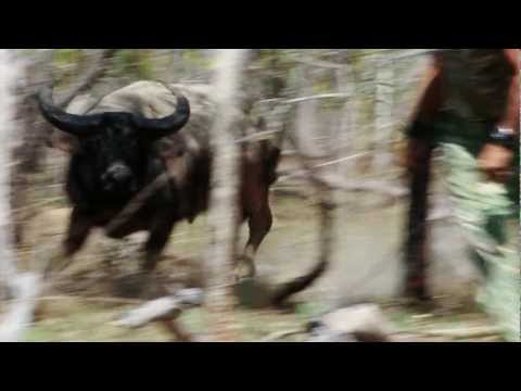 The Australian Pursuit - Water Buffalo And The Way Of The Spear (Preview)