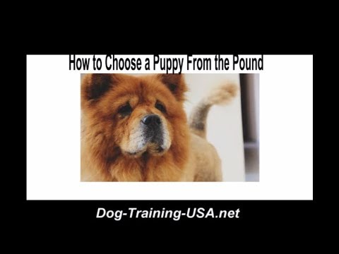 How to Choose a Puppy From The Pound