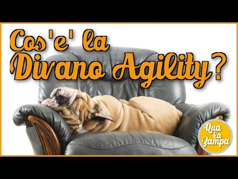 Cani sul divano la divano agility qua la zampa youtube - Sesso sfrenato sul divano ...
