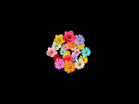 салют из цветов футаж