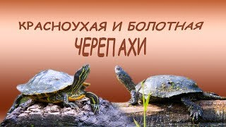 Черепахи в Москве