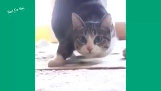 Приколы с котами 2