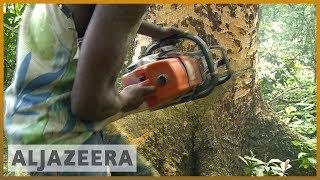 🇨🇩 DR Congo: World's second largest rainforest faces logging threat   Al Jazeera English