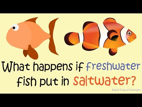 What Happens If Freshwater Fish Put In Saltwater? || GK || Balaji Gopsel Concepts