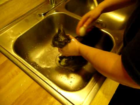 how to give your kitten a bath