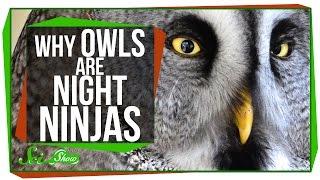 Why Owls Are Night Ninjas