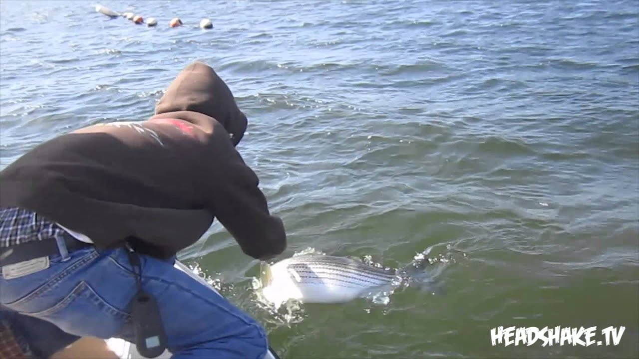 Castaic monster striper 22lber castaic lake youtube for Castaic fishing report