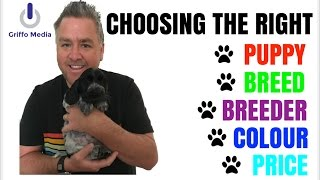 Choosing The Right Puppy & Breeder For A Cocker Spaniel  Show Or Worker? Colour? Cost?