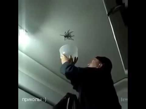 папа ловит паука