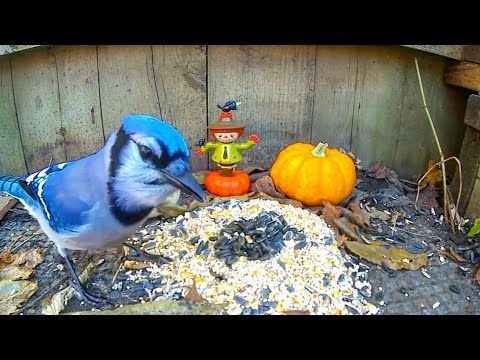 Pesky Birds, Squirrels and Chipmunks For Cats! | 12 Hour Autumn Video | Relax Your Pet