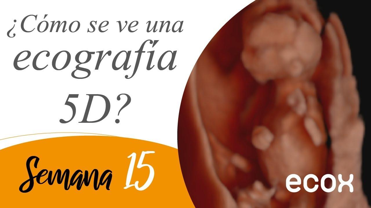 Cuanto mide un bebe a las 15 semanas de embarazo