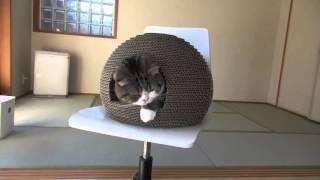 Дом на колесах для кота