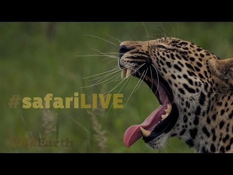 safariLIVE - Sunrise Safari - Oct. 07, 2017 (Part 1)