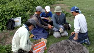 Popular Videos - Tori-shima & Tourism