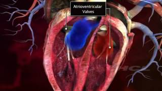 Know about human heart-Brief explanation(Structure and Functioning)