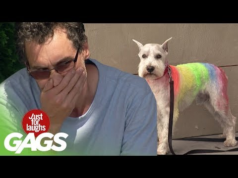Dog Has Rainbow Fur! - Just For Laughs Gags