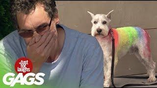 Dog Has Rainbow Fur !
