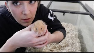 Giving My Hamster A Home Makeover thumbnail