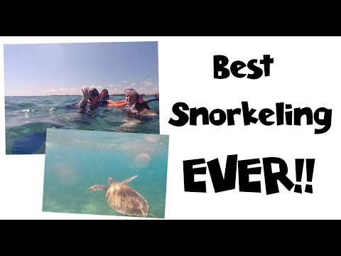 Snorkeling with the Sea Turtles & Jellyfish 🐢 Mahahual Mexico | MSC Seaside Cruise Vlog [ep18]